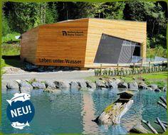 Wild & Freizeitpark Ferleiten :: Wildpark Austria, Places To Visit, Camping, Vacation, How To Plan, Outdoor Decor, Amusement Parks, National Forest, Deck Gazebo