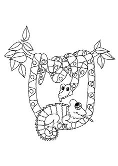 Chameleon Coloring Pages Free