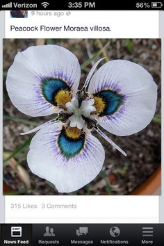 Just gorgeous!! Would make cool wedding flowers too.