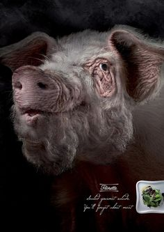 """Florette: Pig      """"Sealed gourmet salads. You'll forget about meat.""""  Advertising Agency: Grey, Barcelona, Spain"""