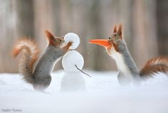 Squirrels make a snowman! by vadimtrunov #animals #animal #pet #pets #animales #animallovers #photooftheday #amazing #picoftheday