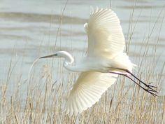 Heron Heron Tattoo, Mists Of Avalon, Planet Love, Mundo Animal, Bird Pictures, Sea Birds, Perfect World, Bird Feathers, Beautiful Birds