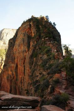 If you have plans to visit Zion National Park, be sure to take this list with you!!  This is the best website for planning a national park vacation -- written by a former park ranger!