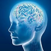 Personnalité limite: incapacité neurologique de régulation des émotions | Psychomédia