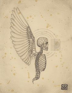 Soul of Science by Daniel Martin Diaz Basically the anatomy of an angel