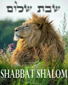Shabbat Shalom  Happy Sabbath from all of us at Mt Zion UFL ministries.  Have a blessed rest.  #Sabbath #shabbat #Yeshua #Mtzionufl #Lansingillinois