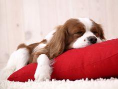 Día 316: Por qué sentimos el cuerpo pesado al querer dormir?
