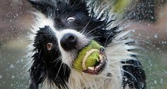 Imagem de http://img.izifunny.com/pics/20120521/640/funny-animals_9.jpg.