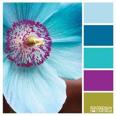 Tropical Turquoise #patternpod #patternpodcolor #color...LOVE THE COLOR COMBOS!!!