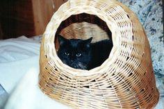 Cat in a basket - http://cutecatshq.com/cats/cat-in-a-basket/