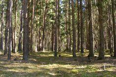 Межциемский лес