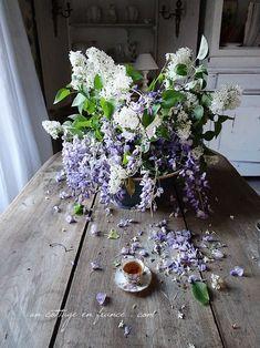 Lilas blanc et glycines du village (The village white lilac an wysteria)