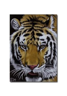 TIGER 18 portrait big cat feline pencil painting Sandrine Curtiss Art Limited Edition Print ACEO by Sandrinesgallery