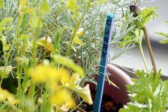 Bildergebnis für pflanzen schild selber machen upcycling