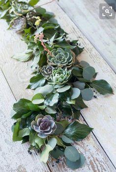 40 succulent cutting