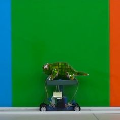 Watch this robot chameleon blend in with its surroundings