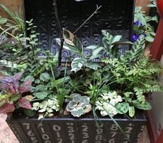 Concepto natura de GCFSMex: armonizando con plantas!!!