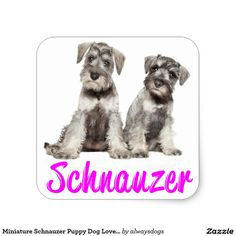 Shop Miniature Schnauzer Puppy Dog Love Sticker created by alwaysdogs. Puppies For Sale, Dogs And Puppies, I Love Dogs, Puppy Love, Miniature Schnauzer Black, Schnauzer Puppy, Schnauzers, Most Popular Dog Breeds, Dog Pin