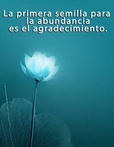〽️la primera semilla para la abundancia es el agradecimiento