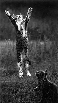 """I'm an acrobat cat"" ""wow your good, says kitty looking on in amazement"""