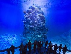 This Artist Created An Incredible To-Scale Panorama Of The Great Barrier Reef