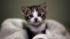 video gattini - Cerca con Google