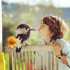 Rescued Magpie Becomes Lifelong Friend With The Family That Saved Her Life (27 Photos)