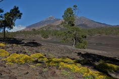 Parque Natural Corona Forestal - Teneriffa
