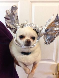 40dd512e8f52b PET DISH  Your pet can join the  Tin Foil Alien Protection Hat Brigade