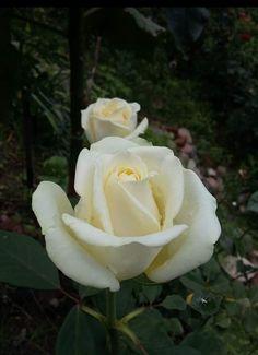 Flower Tattoos, Flower Power, Beautiful Flowers, Plants, Yellow, Flowers, Flower, Wonderful Flowers, Nice Asses