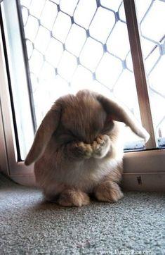 Coniglietti teneri