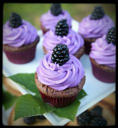 Blackberry cupcakes with fresh blackberry buttercream icing topped with fresh blackberry.