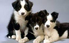 Výsledok vyhľadávania obrázkov pre dopyt Puppies