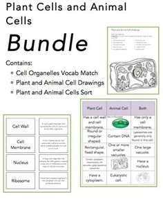 The Wright Ladies present the plant and animal cell bundle. This is your opportunity to get all of our cell products at a discount price. Enjoy our cells drawing worksheets, cell organelle match up, and our cell sort for one low price.  Enjoy and check out our other science bundles: Heat Transfer Bundle  Layers of the Atmosphere Bundle