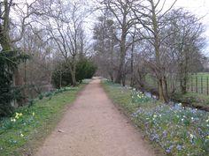 Addison's Walk Oxford by Melanie Jeschke Joy Davidman, English Gardens, Cs Lewis, Spring Time, Celebration, Angels, Sidewalk, Oxford, University