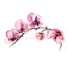 the orchid flowers watercolor isolated royalty-free stock illustration