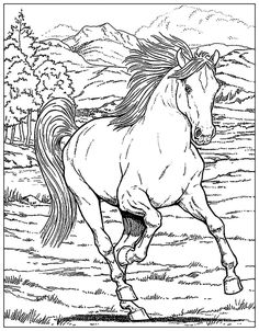 free realistic wild horse coloring pages to print  horse
