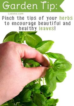 Pinch Your Herbs
