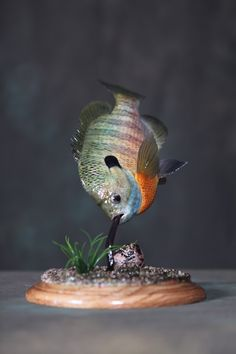 The Month in Fish Pi