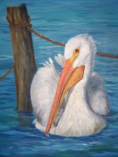 Pine Island Art Association Art And Illustration, Pictures To Paint, Art Pictures, Painting & Drawing, Watercolor Paintings, Watercolours, Pelican Art, Louisiana Art, Bird Drawings