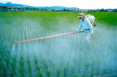 Humanityis facing a a major crisis: our immediate environment is being riddled with pesticides, making us unhealthy faster than we can study the effects. In addition, these pesticides are contributing toa massive reduction inour bee populationand a general decline in soil health. The companies that profit from making these pesticides have made it clear they […]