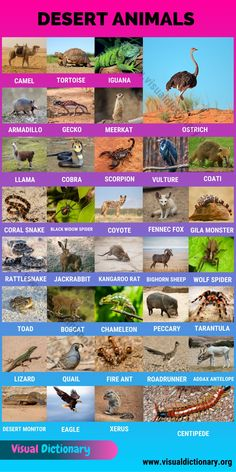 List Of All Animals, Animals Of The World, Learn English Words, English Lessons, Animals Name In English, Animal Classification, Desert Animals, Learning English For Kids, Visual Dictionary