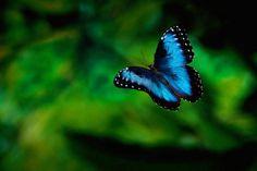 borboletas raras