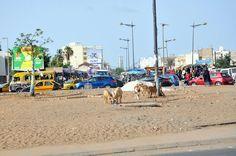 Sénégal, Dakar, crossing Boulevard de la Gueule Tapée and Avenue Cheikh Anta Diop