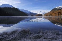 Lake Champfer with larch forest with autumnal colouring Mt Piz da la Margna at back St. Moritz Engadine Grisons Switzerland Europe