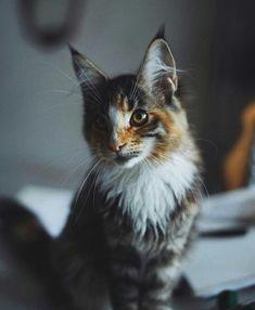 @inkstaboy Animals Beautiful, My Favorite Things, Gatos, Cutest Animals