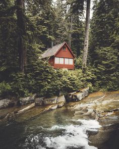 Cabin home in the forest woods