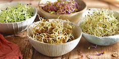 Cómo germinar fácil y hacer brotes de lentejas, garbanzos, trigo y otras semillas