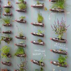 Herbs planted in plastic bottles