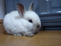 The Ultimate Guide to Dwarf Rabbit Care | PetHelpful